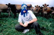 kurt_cows.jpg